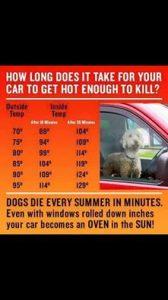 PET HEAT WARNING GRAPH